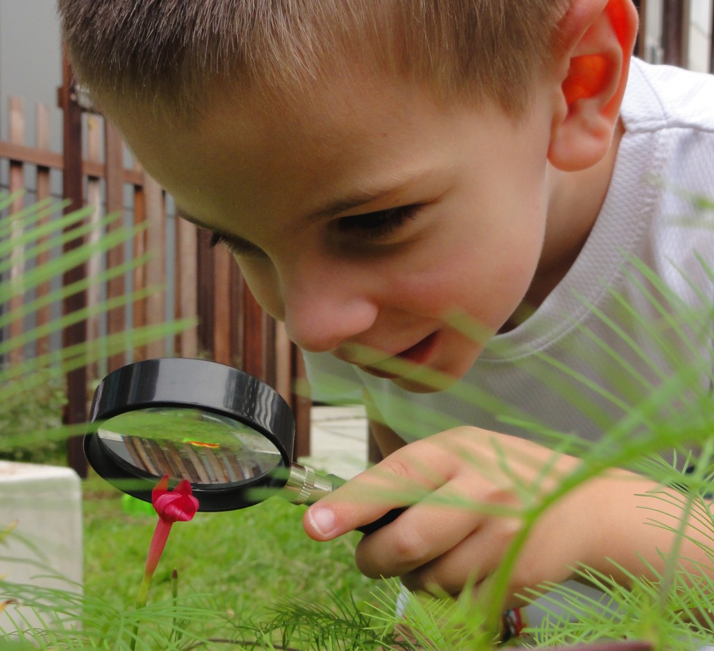 Plants At Home Teaching Naturalist Intelligence At Home Childfirst