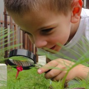 Teaching_Naturalist_Intelligence_at_Home